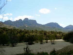 Catalina State Park In Oro Valley, AZ